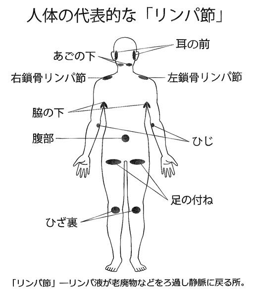 代表的なリンパ節